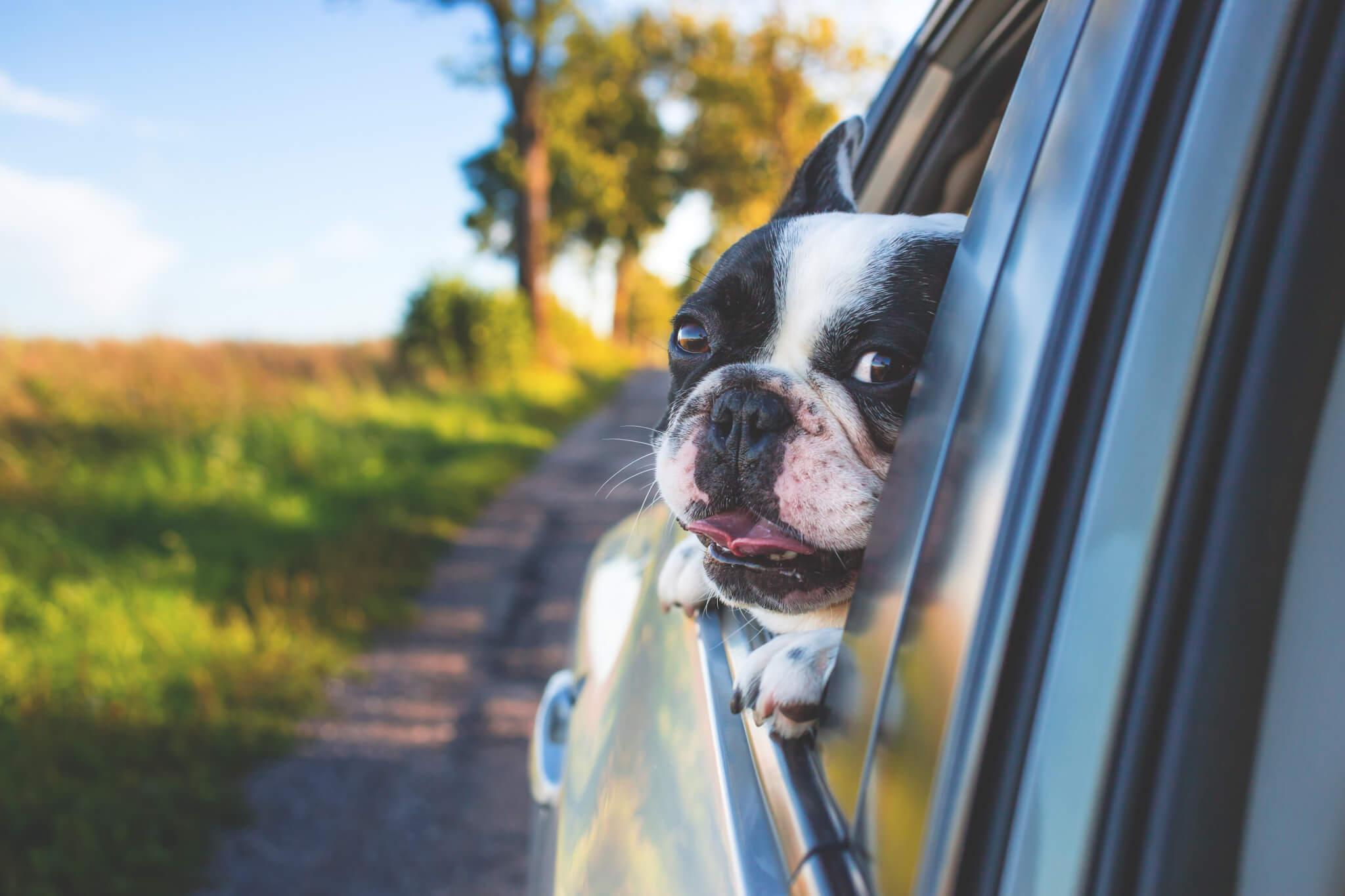 como-deben-viajar-los-perros-en-el-auto