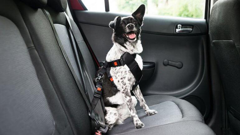 perro-sujetado-con-arneses